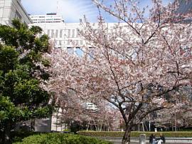 18shinjukuyasukuni005s