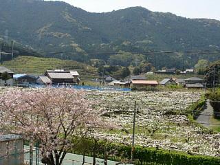 Ishimakihirano23049s