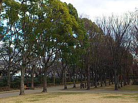 Ushikawayuho231225bs