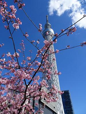 Tokyosky_tree01s