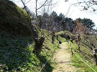 Katakuri290328ishimakinishigawa23s