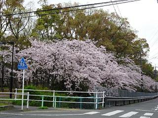 Ushikawayuho290410_02s