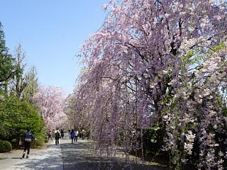 Komagomekichijouji04s